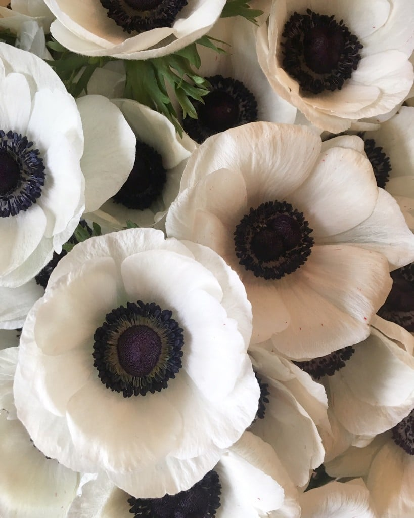 event flowers by Joanne Truby Floral Design
